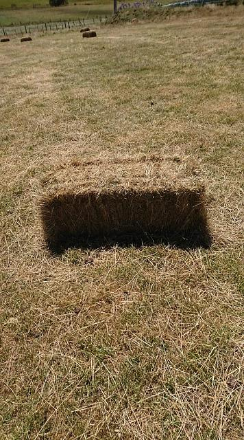 Click image for larger version.  Name:hole in the ground.jpg Views:4 Size:109.5 KB ID:18170